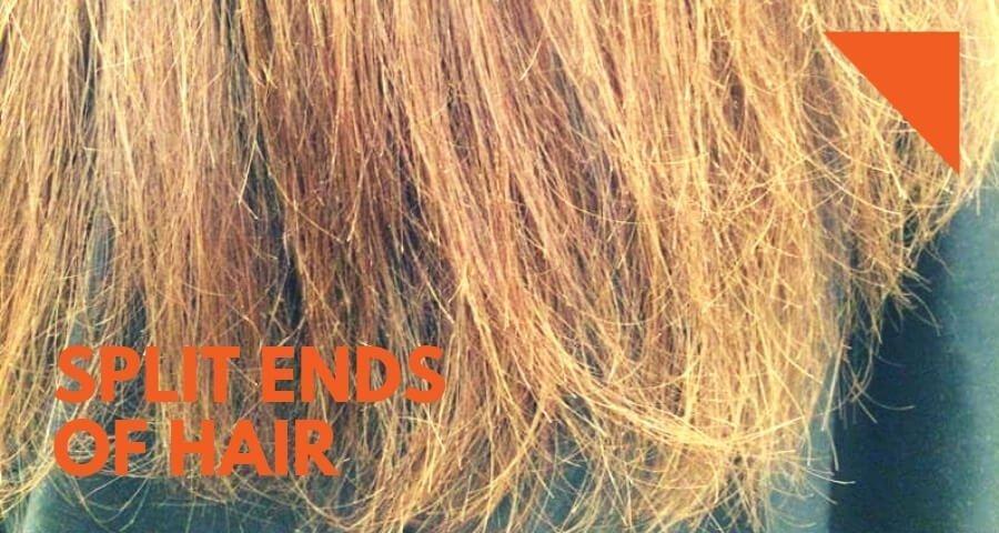 split ends of hair